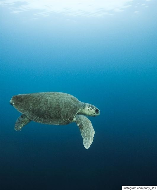 I spent the past weekend chasing turtles around trying to take photos of... (Batroûn)