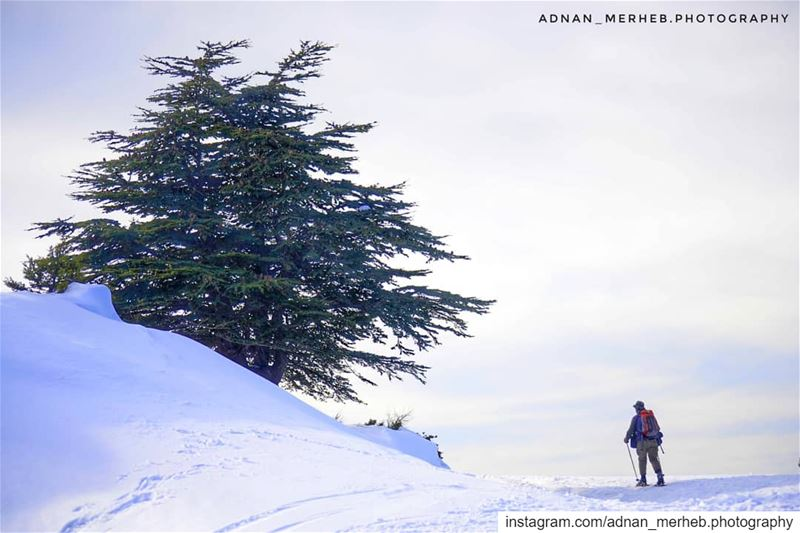 White lebanon 🇱🇧❤️ white akkar ❤️ snow  snowing  winter  TagsForLikes ... (محمية كرم شباط)