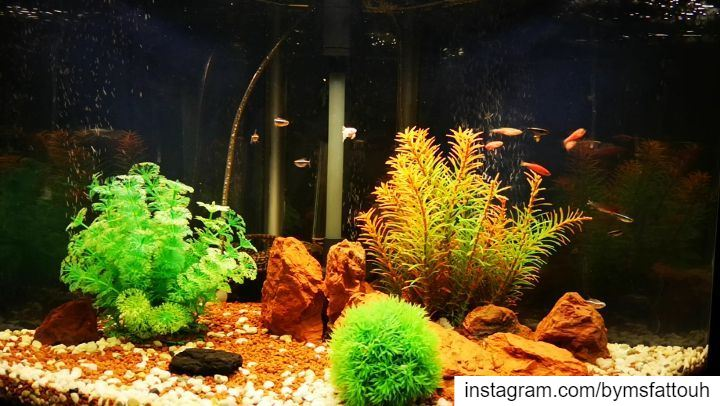 War between plecos in the background..  tuesday  igers  instagramers ...