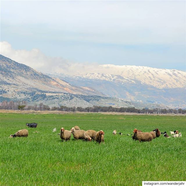 It is not the mountains we conquer, but ourselves!🌳🌱🌼🐑🐐🐏⛰  bekaa ... (West Bekaa)
