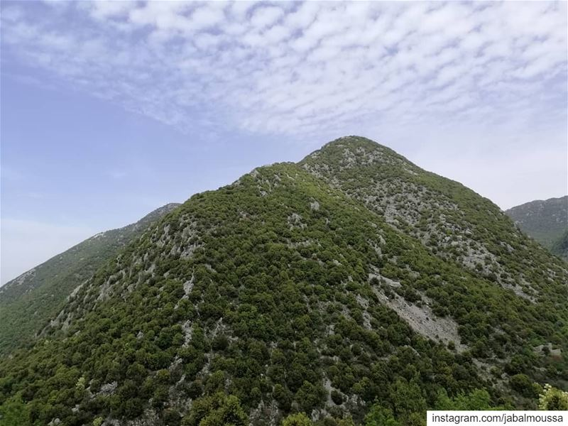 Happiest Labor Day to you all! JabalMoussa  unesco  unescomab ... (Jabal Moussa Biosphere Reserve)