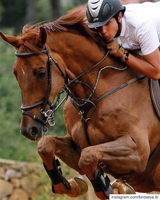 Manpower✖️Horsepower, One direction | 2012..━ ━ ━ ━ ━ ━ ━ ━ ━ ━ ━ ━ ━ ━... (Zeghrine Equestrian Club)