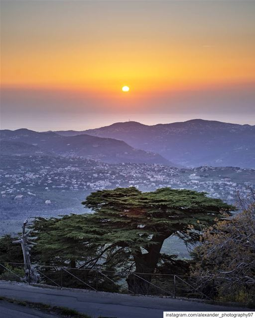 Last light - The golden hour at Mount Barouk Biosphere - 12/5/2019  sun ... (Arz el Bâroûk)