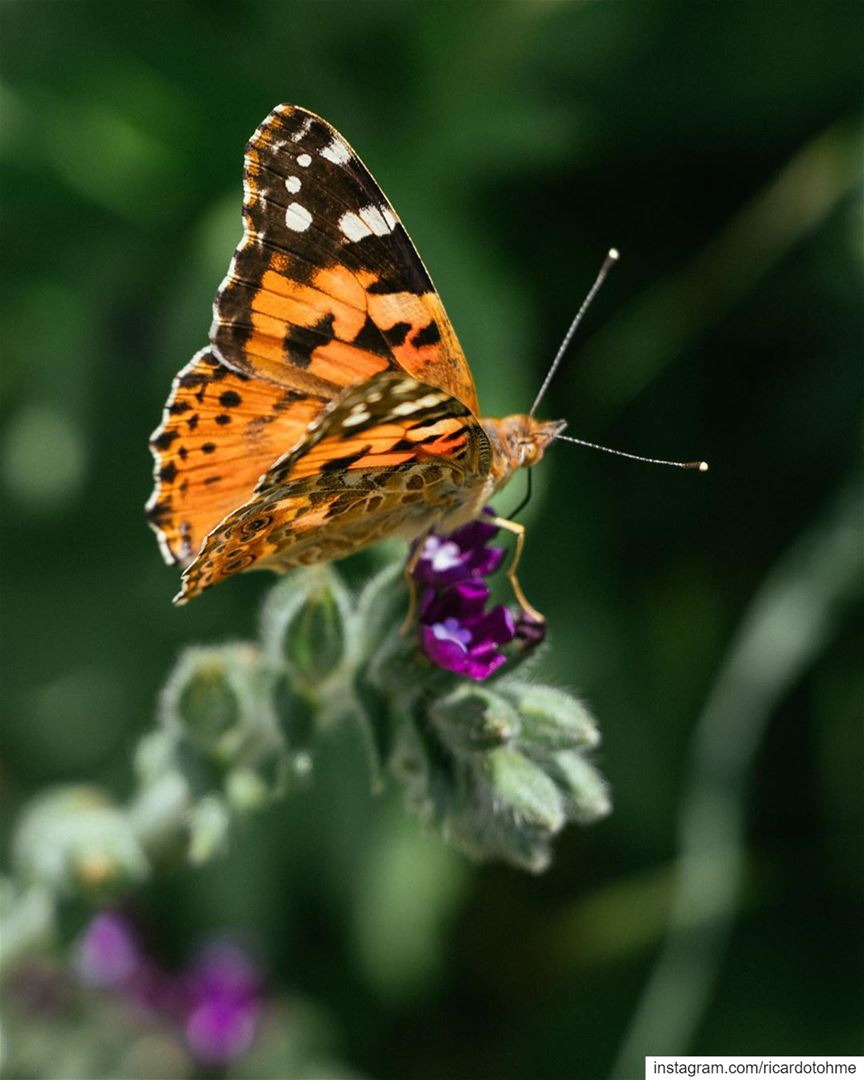 Was surprised by the number of butterflies we observed along our hike. The... (Akkar)