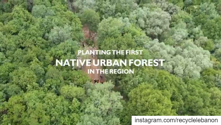 """To really feel a forest canopy one must use different senses, and often..."