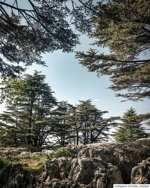 Good Morning 🌄 🔝 LiveLoveTannourine  Tannourine  LiveLoveLebanon ... (Cedar Reserve Tannourine)