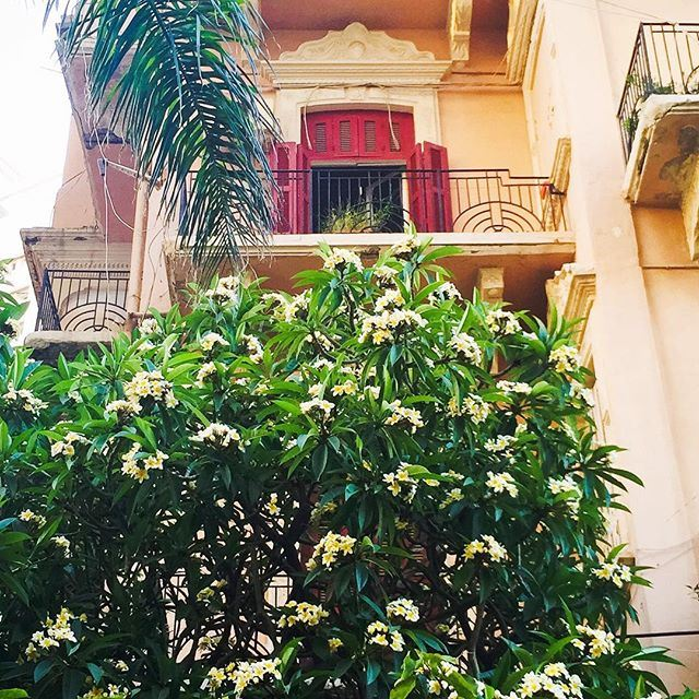 When Beirut looked like Italy... Balcony overlooking frangipani and palm trees 🌴. Sabah el Nour my friends ☀️☕️🇱🇧! nostalgia (Beirut,manara)