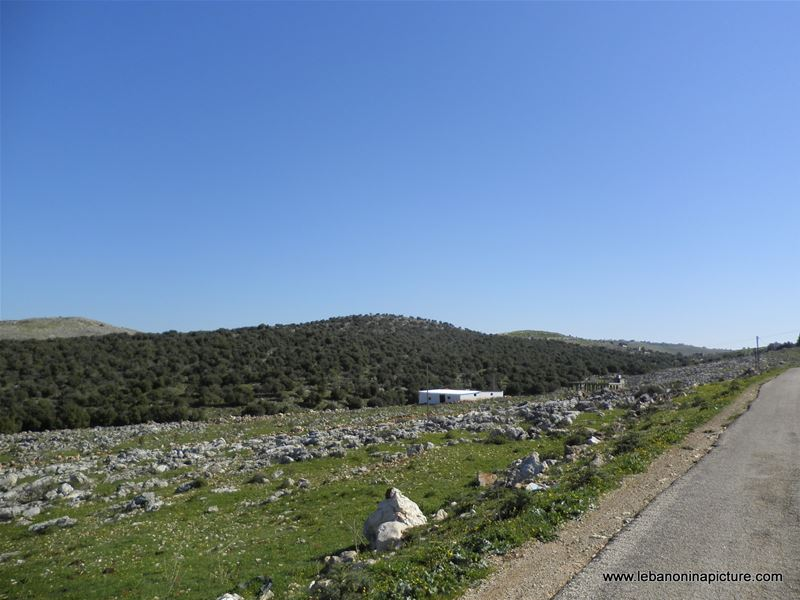 Yaroun's Beautiful Green Landscape (Spring 2011)
