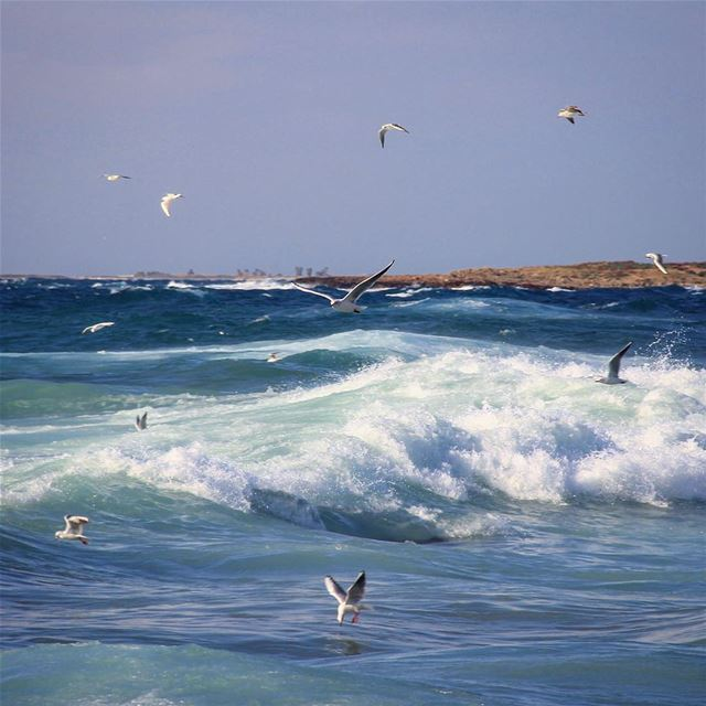 Life in a showtime whenever we want to stare.🌊 waveafterwave  birds ... (El-Mina, Tripoli)
