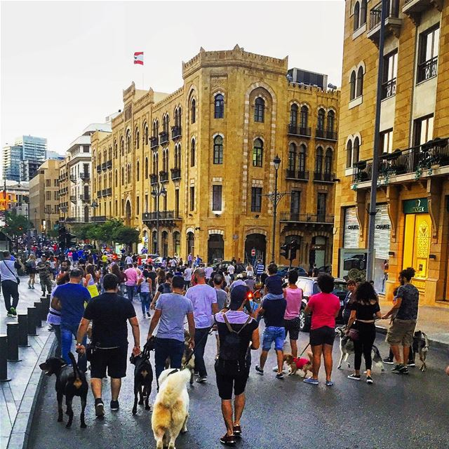 Beirut dog walk event 2016