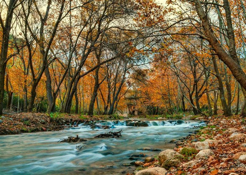 🍁🍁  sunday roadtrip river forest nature naturephotography photography... (Nahr Moussa)