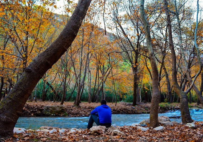 sunday trip roadtrip hiking hike river forest nature naturephotography... (Nahr Moussa)
