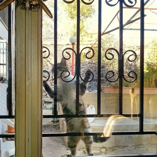 Hello🙀 Its Freezing out here 😨 can u plz let me in?!?............ (Saghbîne, Béqaa, Lebanon)