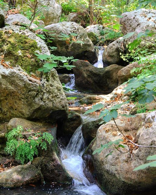 You are the future, and the future looks good.. water  life  green ... (Tannourine, Lebanon)