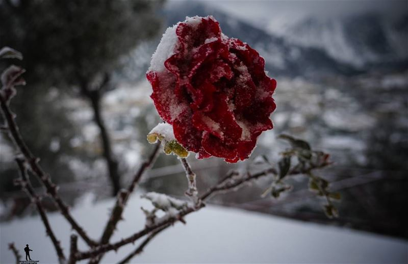 You cannot have a positive life and a negative mind... snow  flower ...