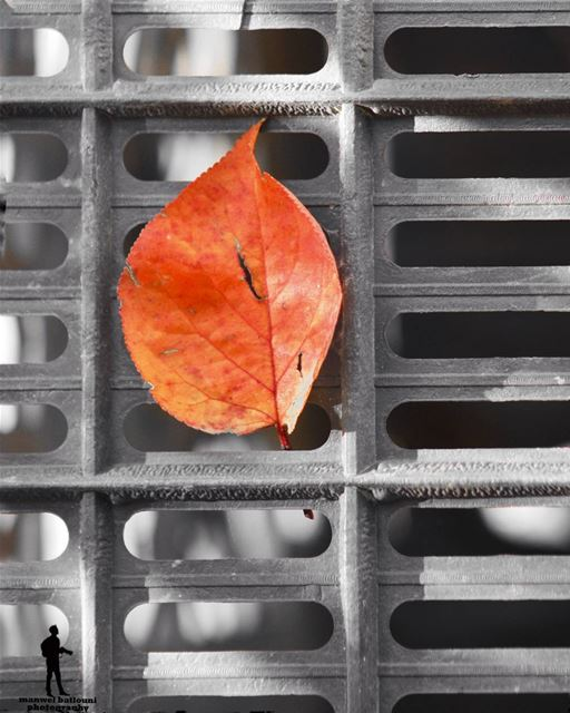 In every change, in everyfalling leaf there is somepain, some beauty....