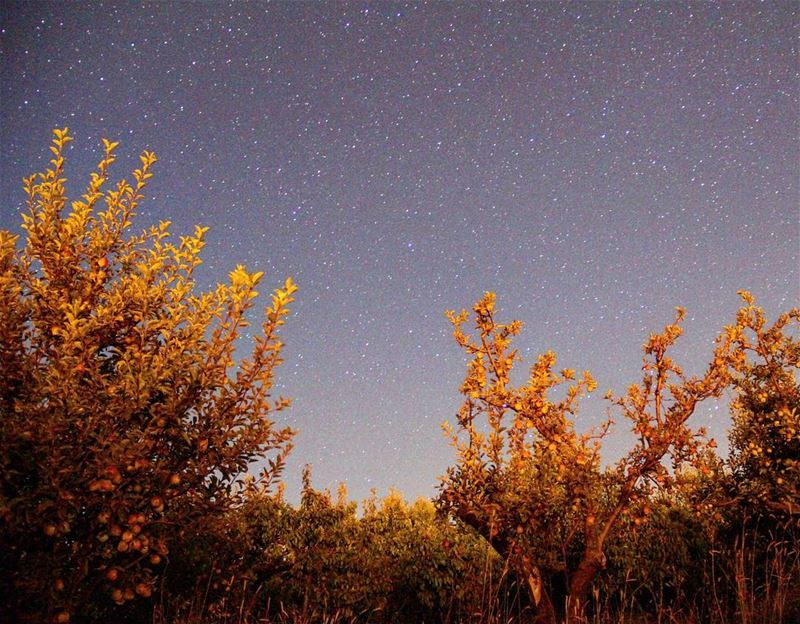 The song of the stars made the apples sleep and grow overnight..... (Ehden, Lebanon)
