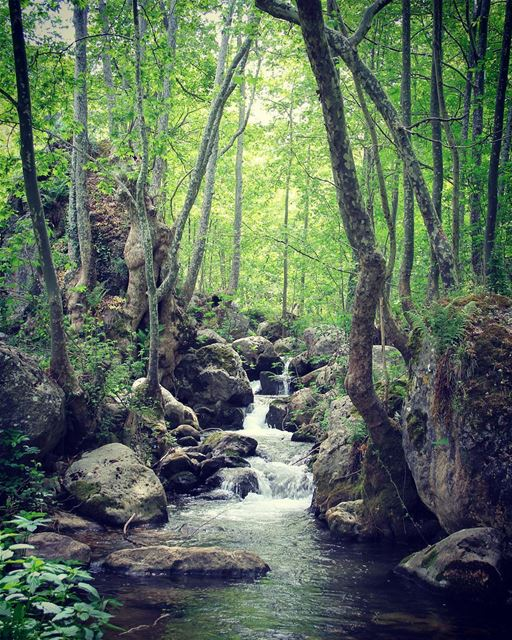 My dreams come true in this fairytale. river  flow  nature  jungle  tree ... (Tannourine)