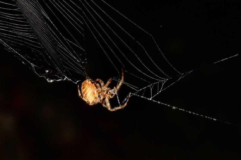 Ever seen a spider eating its own web?!! Voila!__________________________...