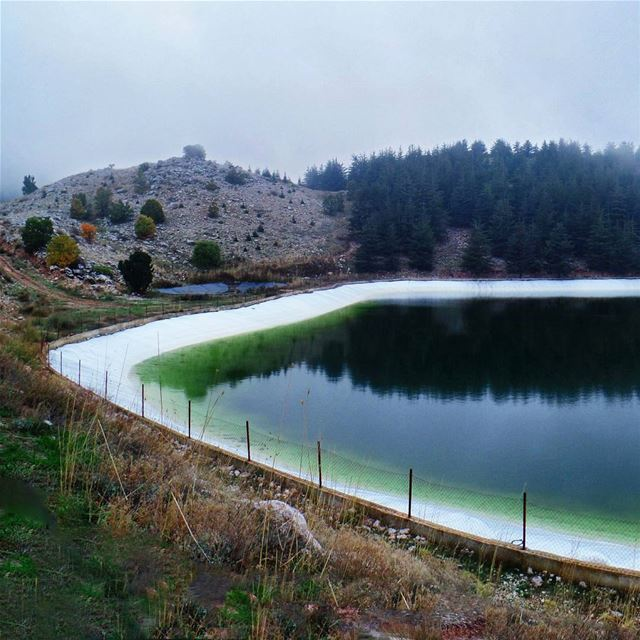 "Part 3/3 : ""Heart"" shaped Pond shoufbiospherereserve  baroukcedarforest ... (Barouk Cedar Forest)"