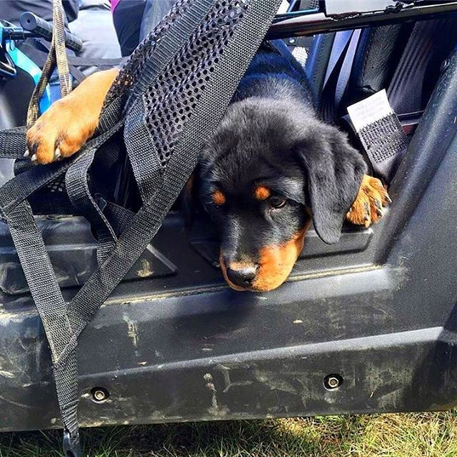 He's sad that the Off-Road Trip is Over ! polarislebanon  polaris  rzr ...