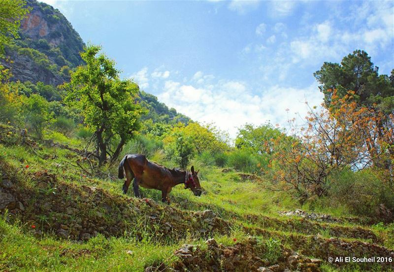 tb  qannobine  horse  valley  nature  green  holy  land  naturelovers ... (Wadi qannoubine)