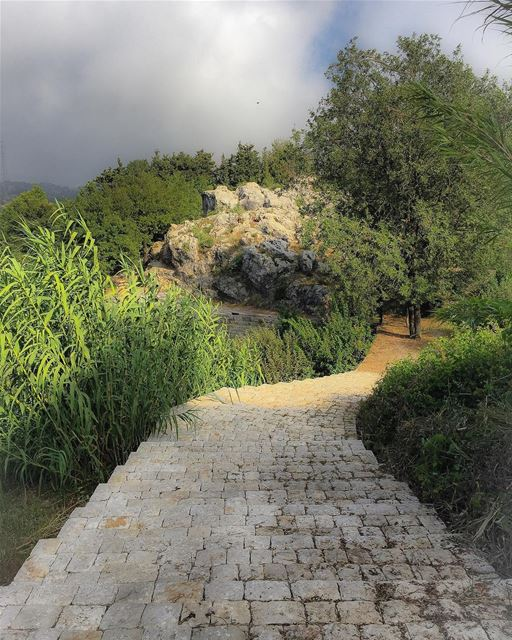 Step down to a world of  wonders  nature  path  mist  landscape  ig_myshot...