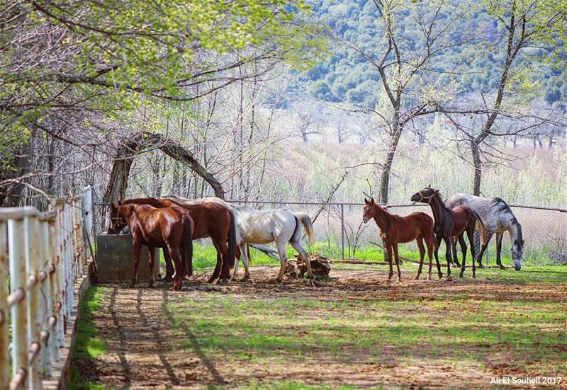 tb  bekaa  valley  horse  farm  nature  trees  lebanon  lebanon  colorful... (Zahlé, Lebanon)