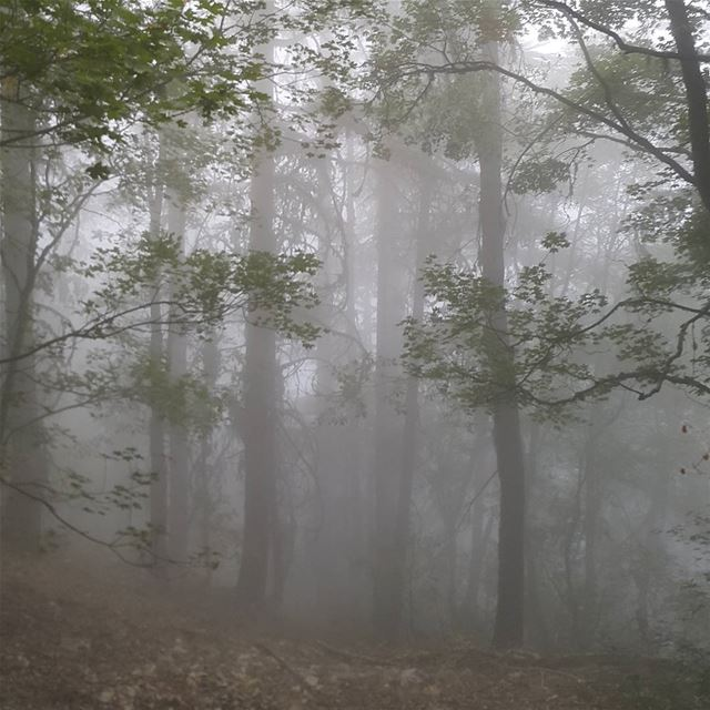 👻 🎃 lebanon  naturelovers  forest  fog  trees  scary  spooky  hiking ...