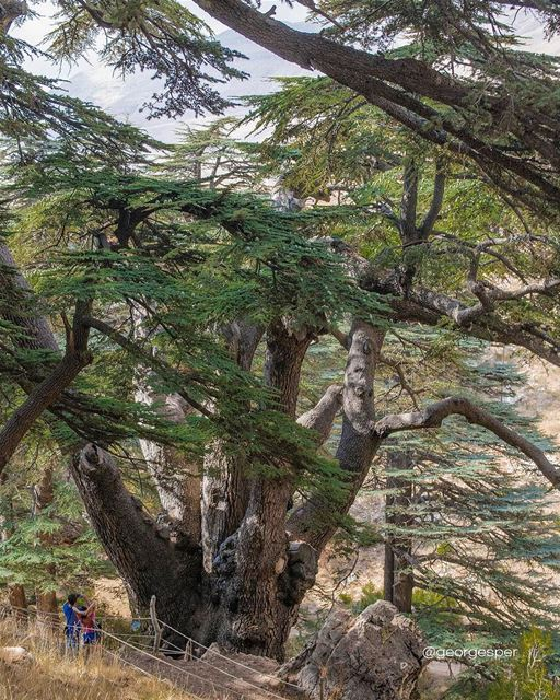 Cedars of God, Lebanon 🇱🇧.... proudlylebanese  beautifullebanon ... (Cedars Of Lebanon)