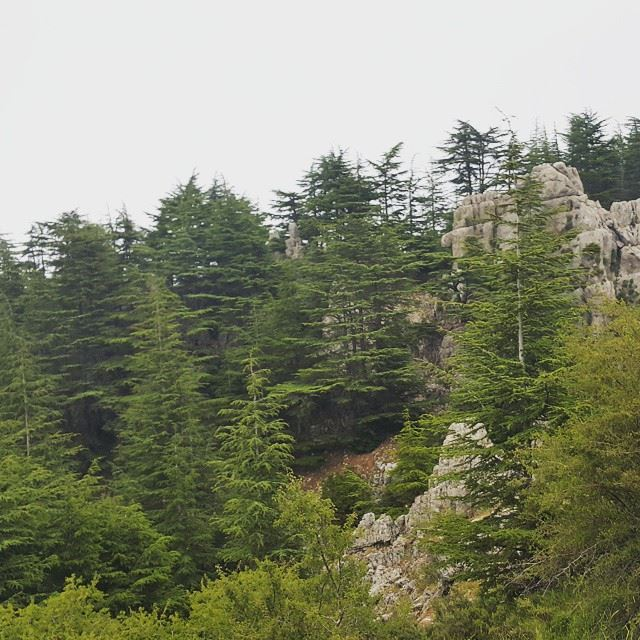 nature  mountains  amazing  mist  cedars  hiking  lebanon  forest  north ...