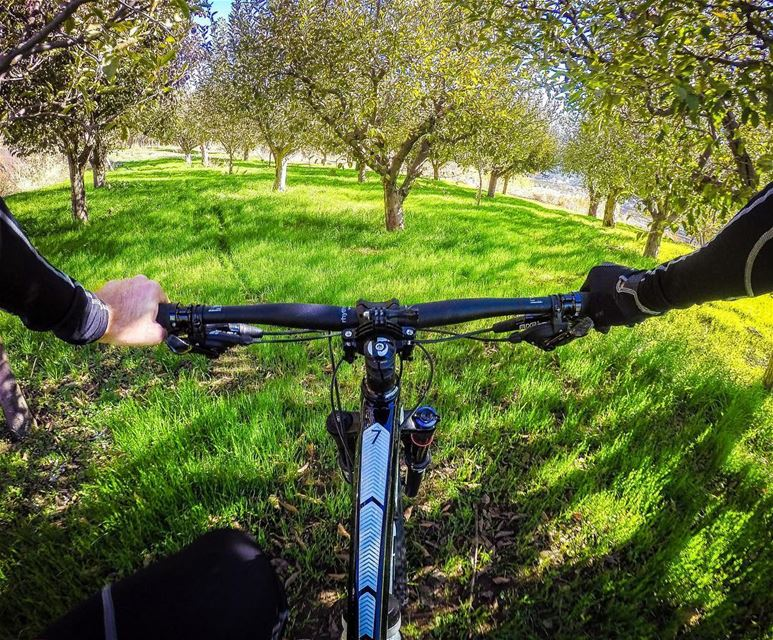 🚴🏻 🌳 . goprophotography  goprocycling  cyclingphotos  cyclingshots ... (Lebanon)