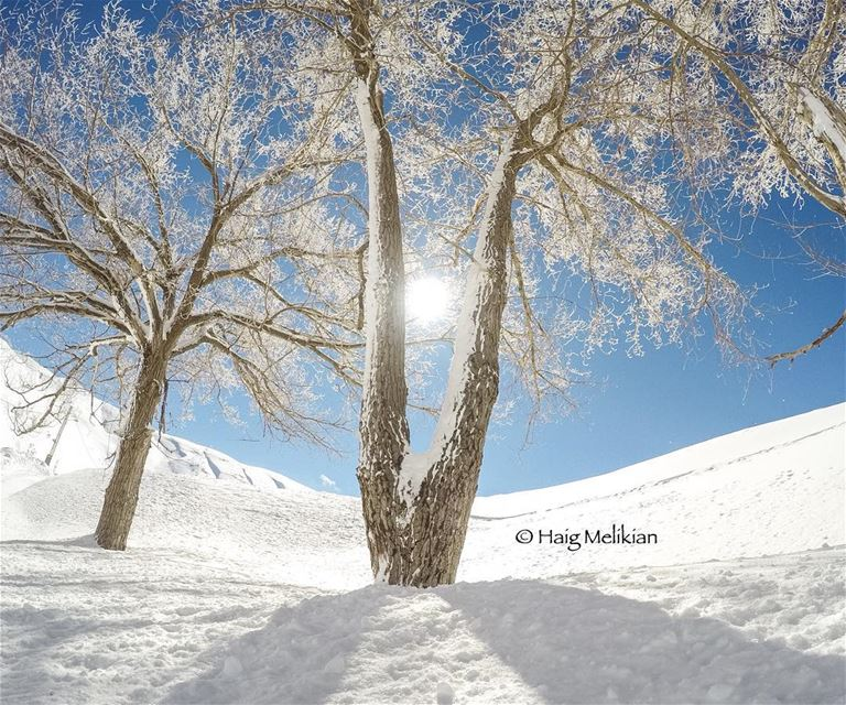 Winter Wonderland ❄️  Lebanon  whatsuplebanon  instagram  lebanon_hdr ... (Heaven)