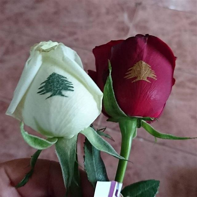 لبنان  استقلال  ٧٣  red  white  rose  independenceday  november  22 ...
