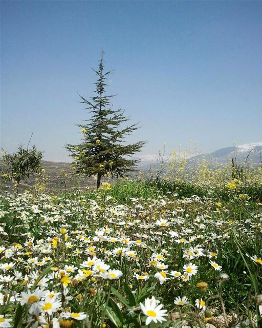 The day the Lord created hope was probably the same day he created spring!... (Mazra`At Ash Shuf, Mont-Liban, Lebanon)