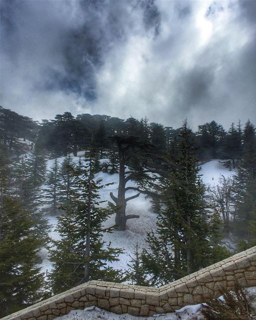 ||Collecting Moments|| Cedars of God, Bcharre, Lebanon 🇱🇧.... (Cedars of God)