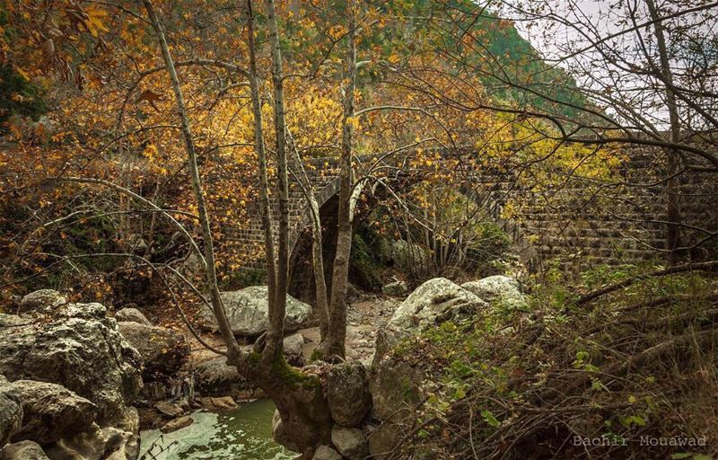 mother  nature  old  bridge  river  wadialsalib  kfardebian  nikon ...