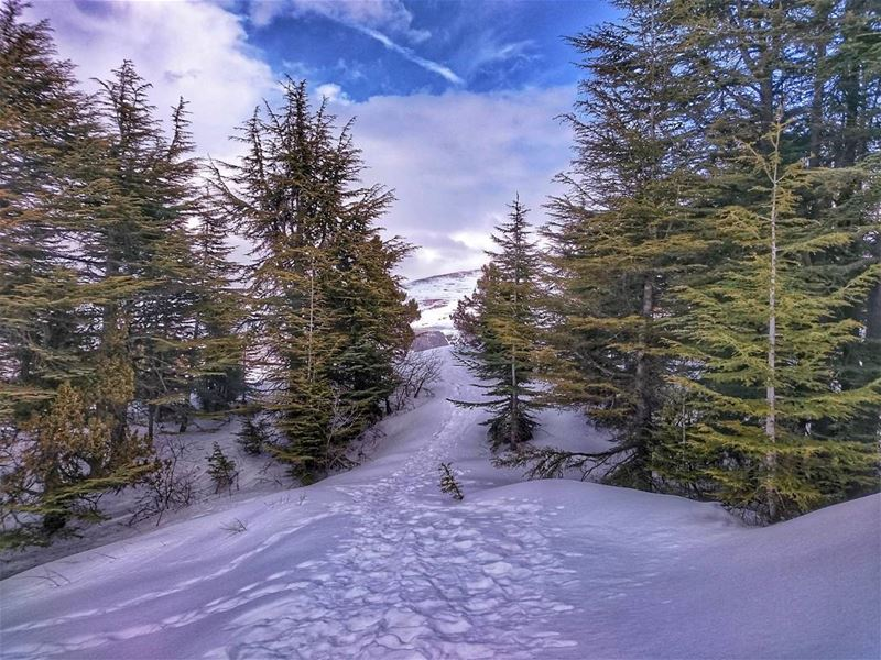 ❄️ 🌳 🌅 🔝 love instagood photooftheday @top.tags tbt cute me ... (Cedars Of Tannourine)