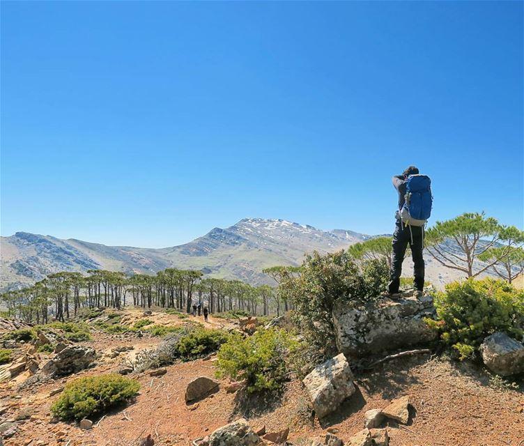 Siffler sur la colline... breathe hike climb nature mountains pine ...