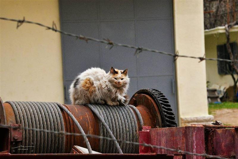 Peaceful cat 🐺 (Wadi Annoubin)