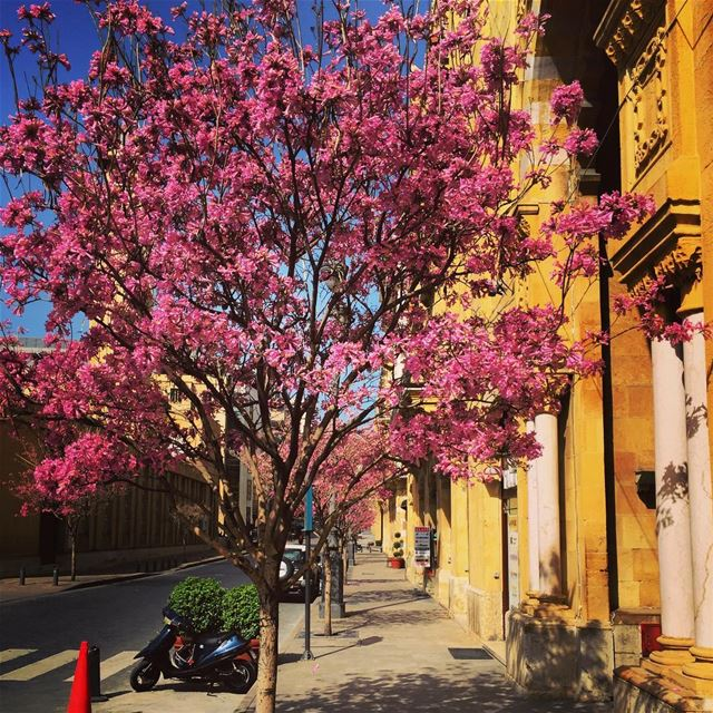 Spring time! spring trees colors springleaves beirut lebanon ... (Downtown Beirut)