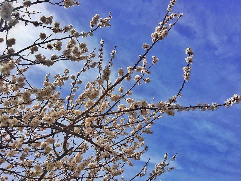Spring 🌾 ... (Adma, Mont-Liban, Lebanon)