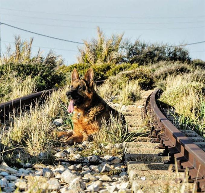 Waiting for the train that was never coming back petsoflebanon lebanon ...