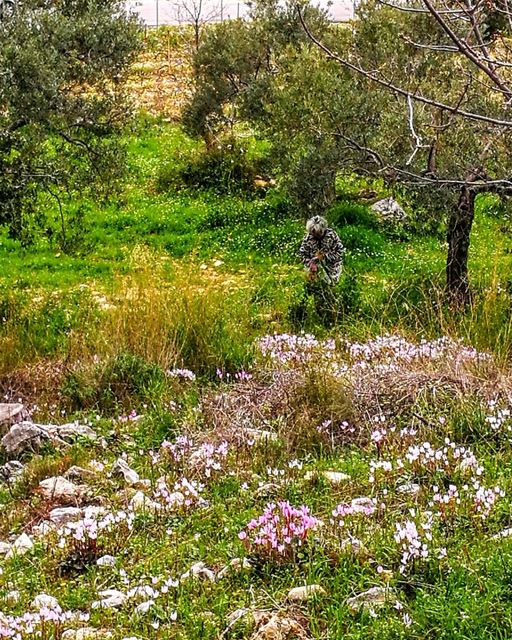 Collecting FlowersHealthy Tea. lebanoninapicture lebanonmycountry ... (Smar Jubayl, Liban-Nord, Lebanon)