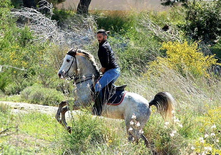 horse maghdouche naturephotography nature insta_lebanon instapic ...