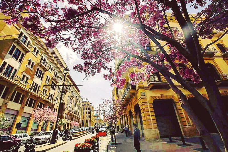 Spring has already started in Beirut 🏡 🇱🇧 (@afpphoto) lebanon ...