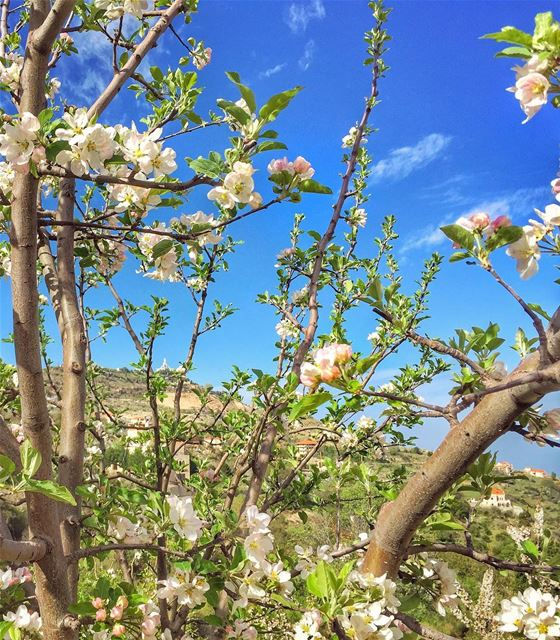 As this spring blossoms in this most hopeful day, I wish you all the... (Ehden, Lebanon)