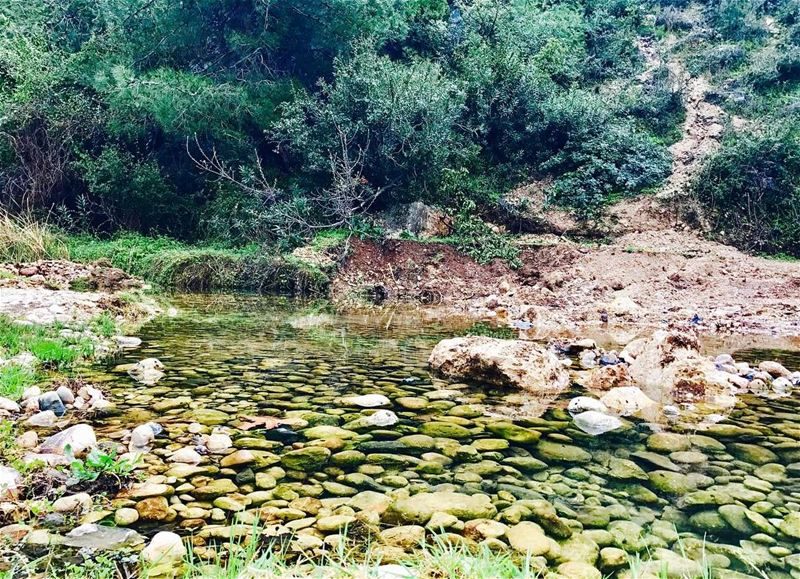 """Your mind is like this water. When it is agitated, it becomes difficult... (Lebanon)"
