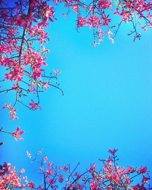 BLOOM BABY, BLOOM 🏵🏵🏵.. spring springtime ...