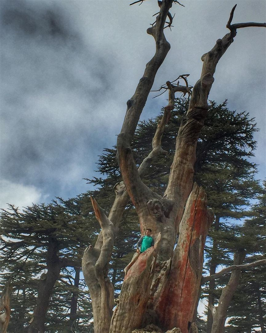 One of the amazing places in Lebanon is The Cedars of God, it is one if... (Cedars of God)